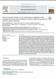 Age and seasonal variation in testis and baculum morphology in East Greenland polar bears (Ursus maritimus) in relation to high concentrations of persistent organic pollutants